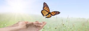 Cedar Community butterfly release; West Bend WI